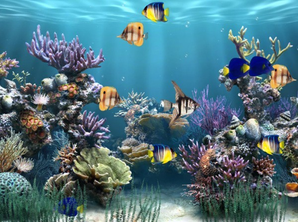 underwater aquarium wallpaper